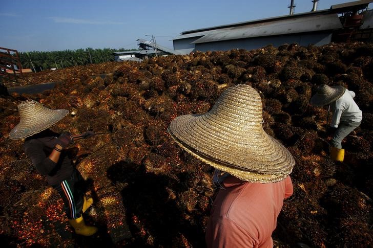 A worker collects palm oil fruit inside a palm oil factory in Sepang, outside Kuala Lumpur, June 18, 2014. Photo: Reuters/Samsul Said