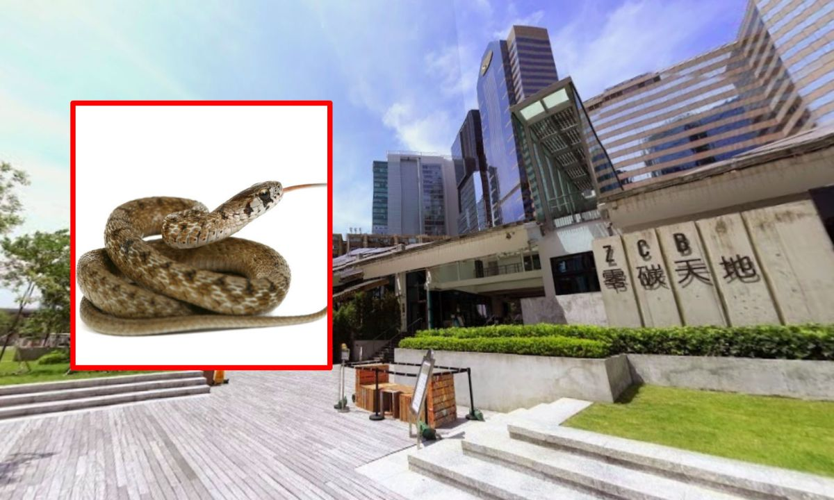 The area in Kowloon Bay where the snake was seen. Photo: Google Maps, iStockphoto
