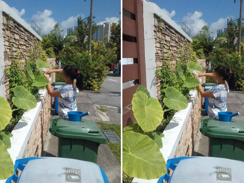 A domestic worker wiping plant leaves outdoors in Singapore. Photo: Foreign Domestic Worker in Singapore@Facebook
