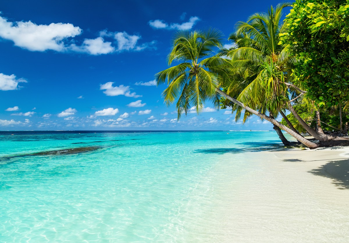 coco palms on paradise beach. Photo: iStock