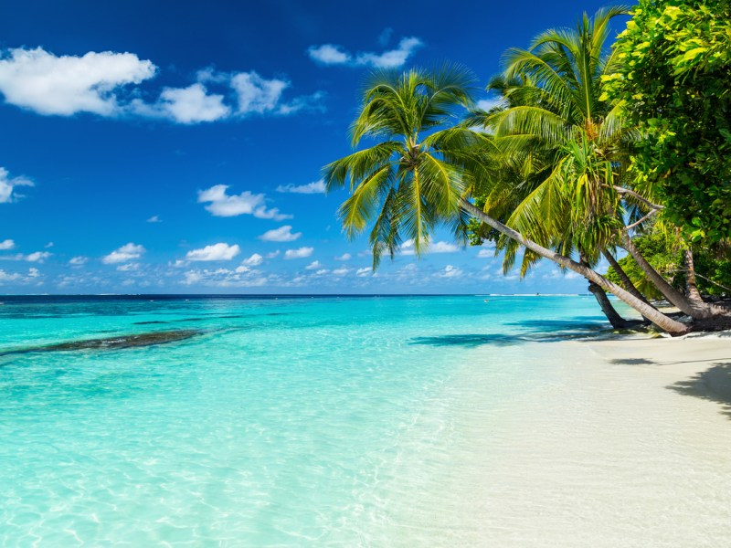 coco palms on paradise beach. Photo: iStock