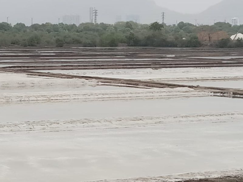 A view of Mumbai's iconic salt pans in Maharashtra state. The BJP now wants to build homes on them. Photo: Kanchan Srivastava