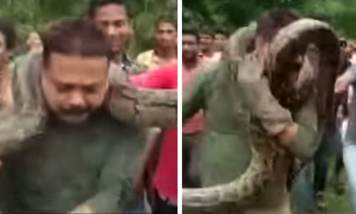 Sanjoy Dutta tried taking a selfie with the python around his neck when it started to tighten its grip on him. photo: YouTube