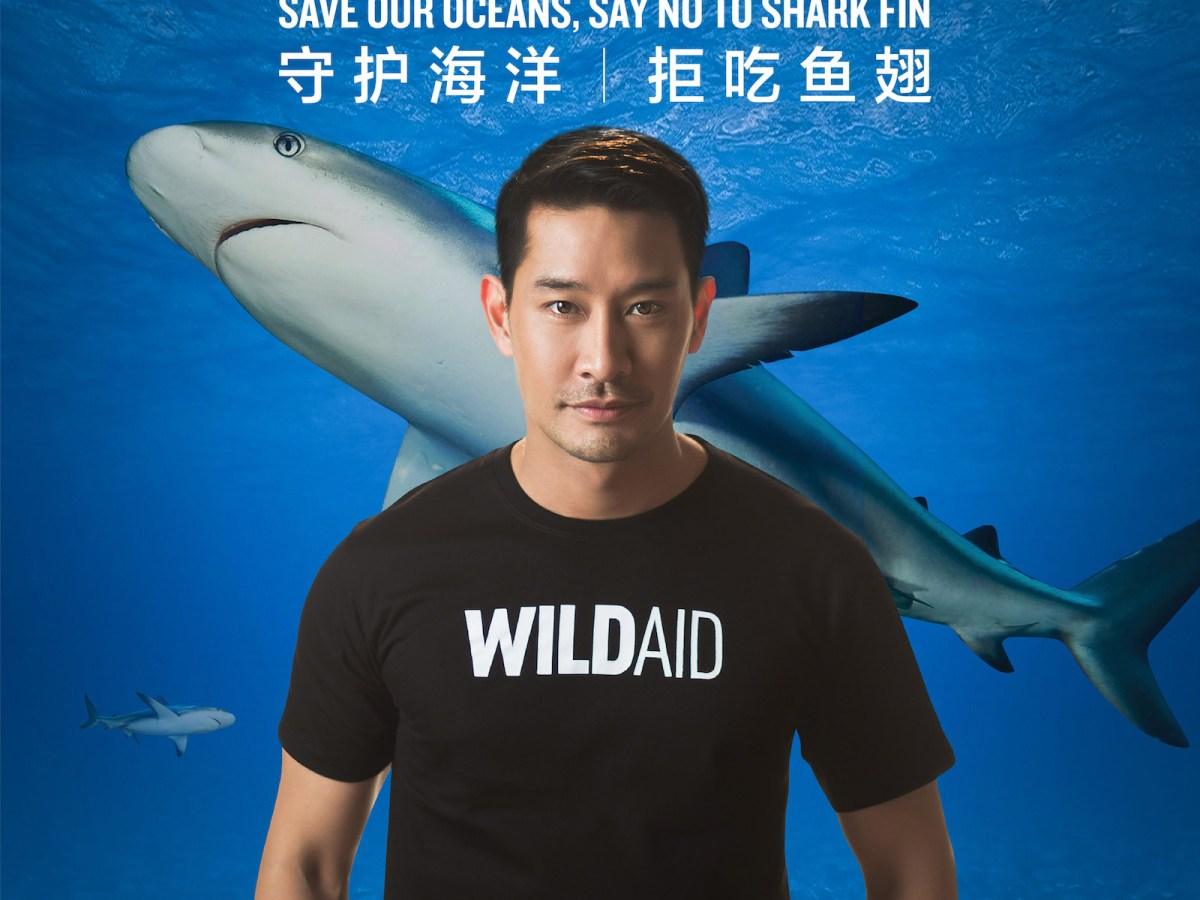 Thai TV star Pong Nawat Kulrattanarak and the new campaign to save sharks. Photo: WildAid