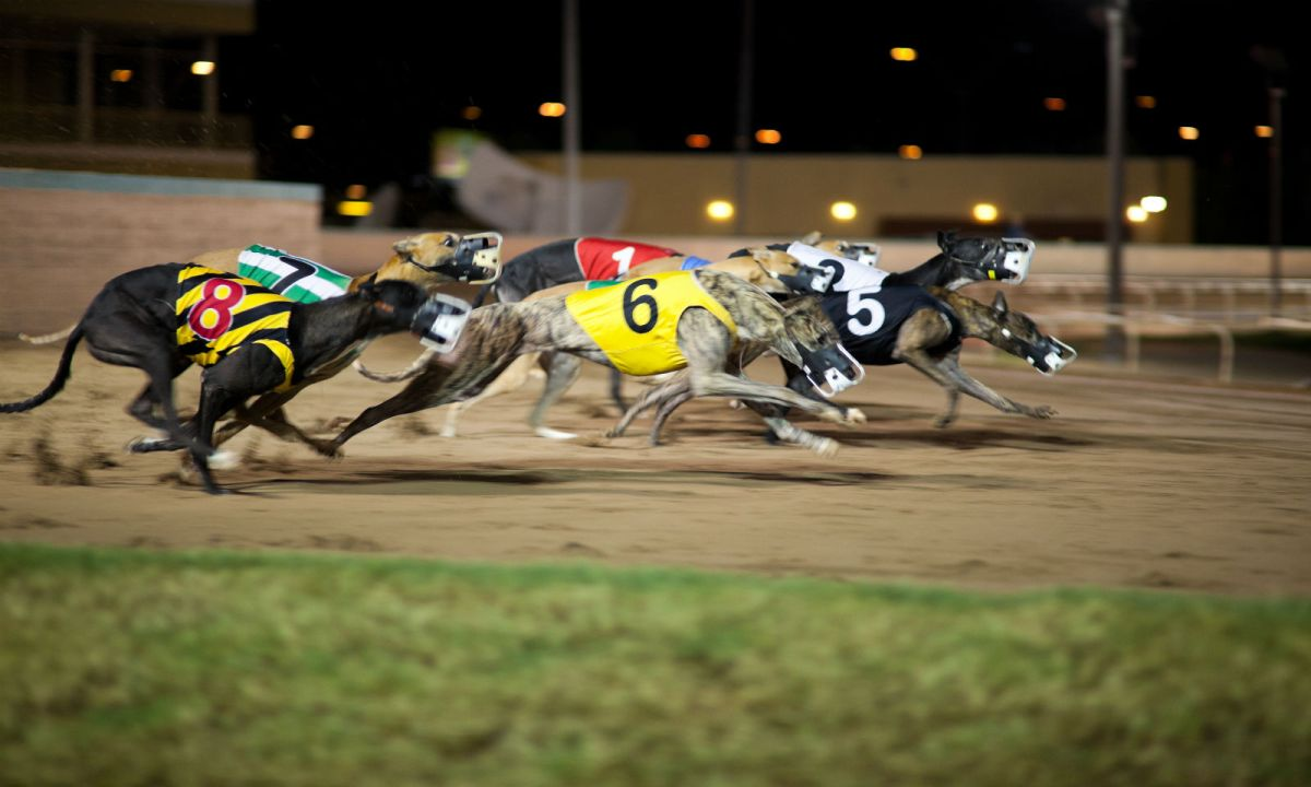 The closure of Macau's only dog-racing track left more than 500 dogs abandoned. Photo: iStock