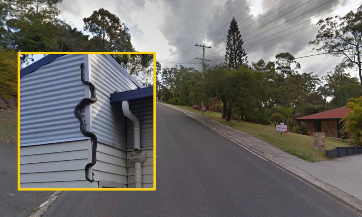 A python climbs on the wall of a house on Bertana Drive in Mudgeeraba, Australia. Photo: Google Maps, Robbie Knills