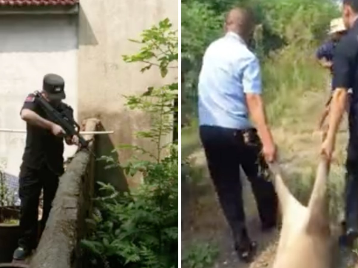 A wild boar was shot dead by Anhui police. Photo: Anhui police