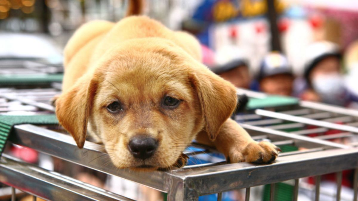 While cases are rare, calls are mounting for a ban on the consumption of dog meat in the UK. Photo by iStock.
