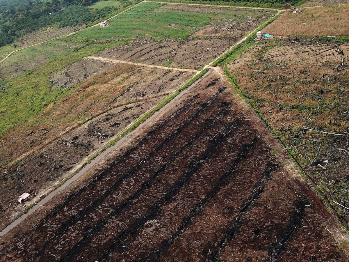 This aerial photo taken in March shows a protected area of the Rawa Singkil wildlife reserve in South Aceh being burnt in prior to the opening of a new palm oil plantation. Green groups say it drives deforestation, with huge swathes of forest logged in recent decades. Photo: AFP / Januar