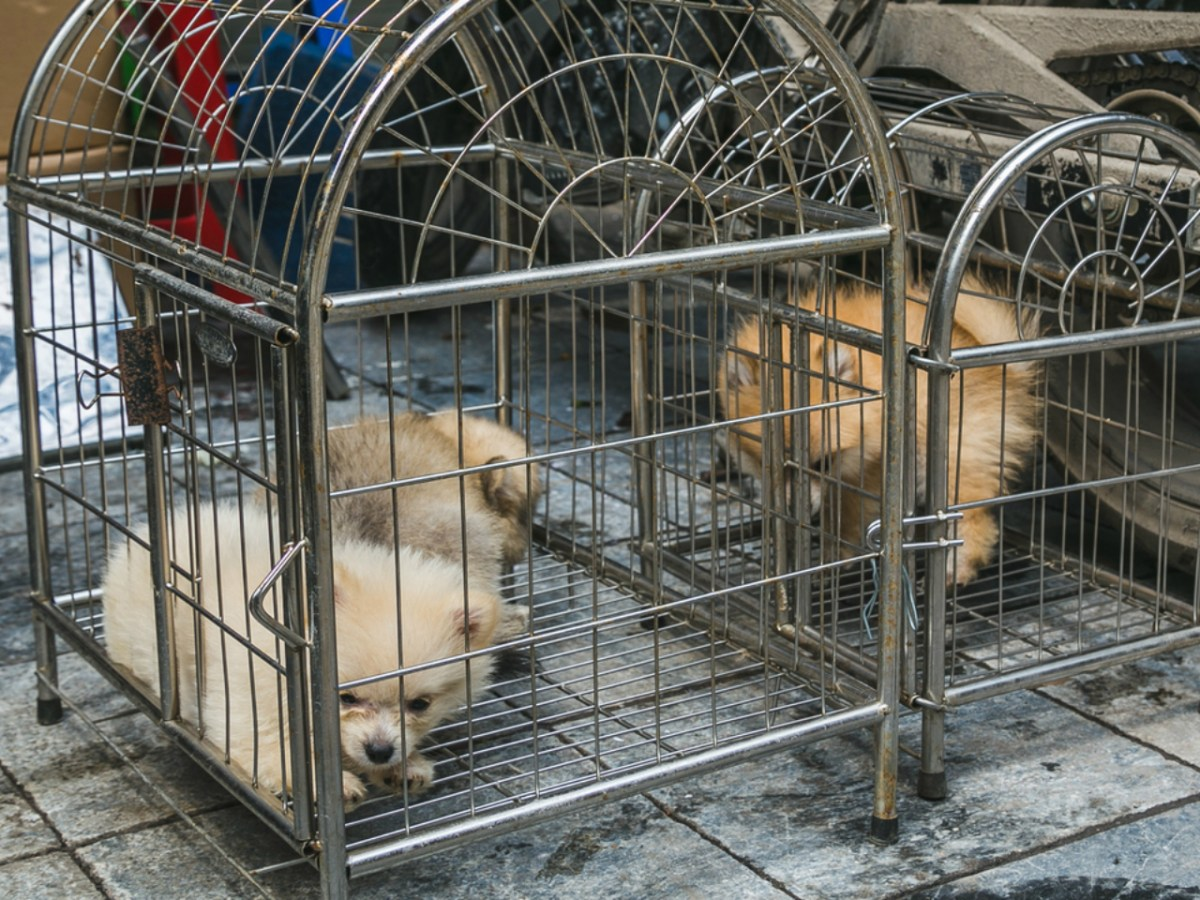 Dog meat is used in some traditional Vietnamese dishes. Photo by iStock.