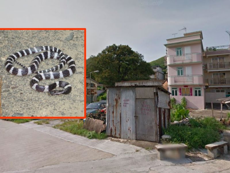 Lok Ma Chau in Yuen Long, the New Territories and, inset, the many-banded krait. Photo: Google Maps