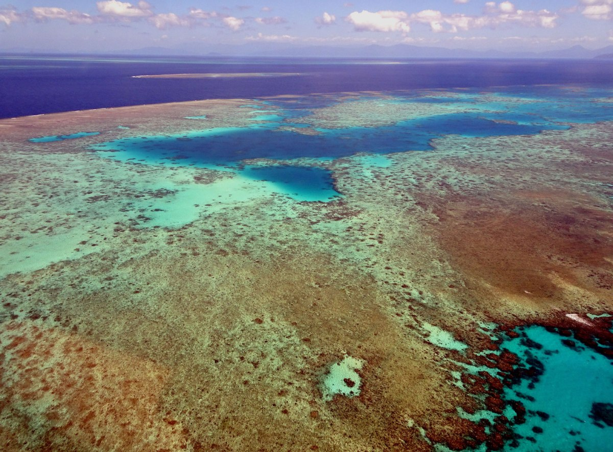 Bleaching seen on the landscape of the Great Barrier Reef in the Coral Sea off the coast of Queensland, Australia, 2018. Photo: AFP