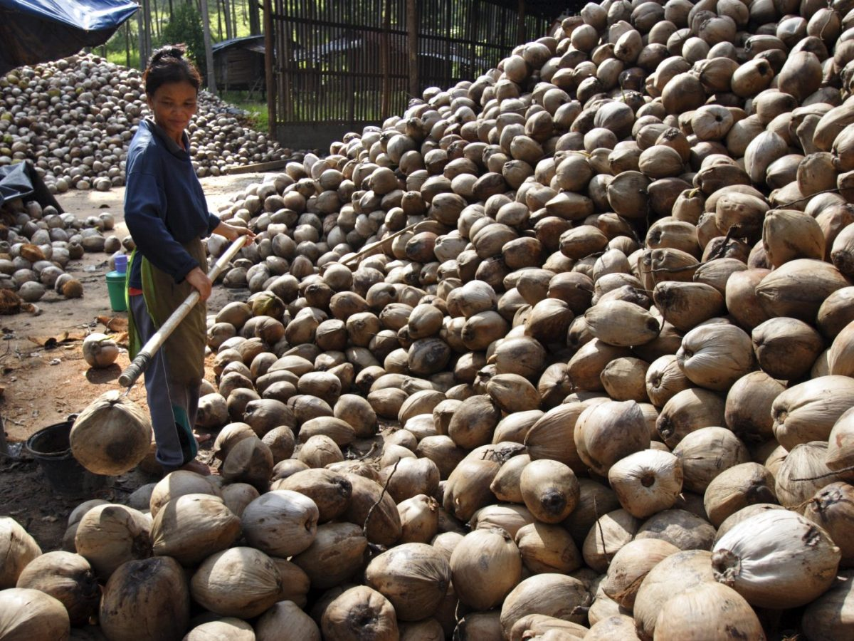 A coconut plantation on Koh Samui in southern Thailand. Photo: AFP