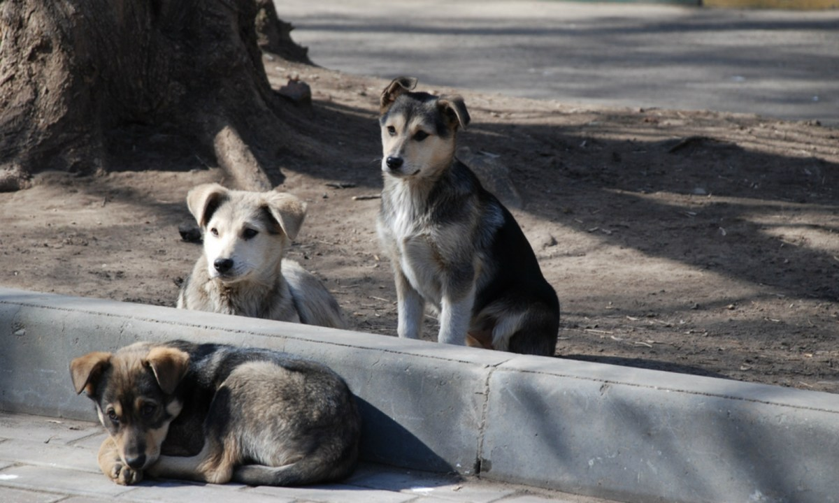 The consumption of dog meat remains common in some Asian countries. Photo by Wikimedia Commons.