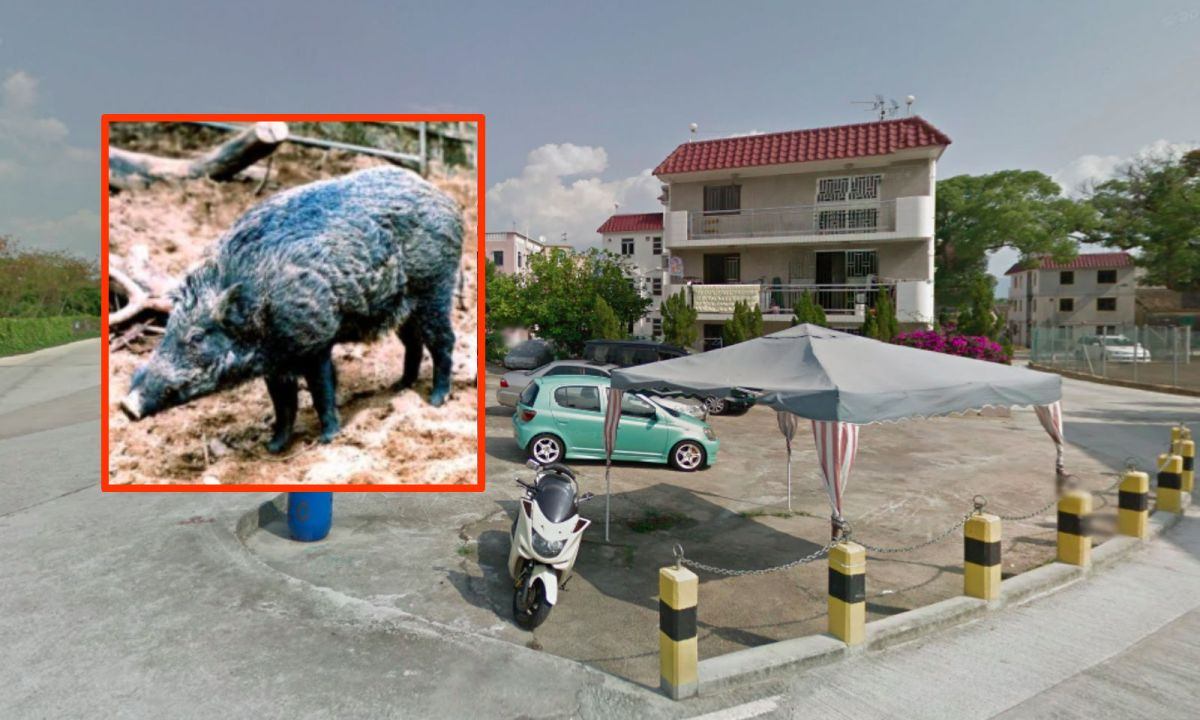 Sai Kung in the New Territories where the boars turned up. Photo: Google Maps/HK Government