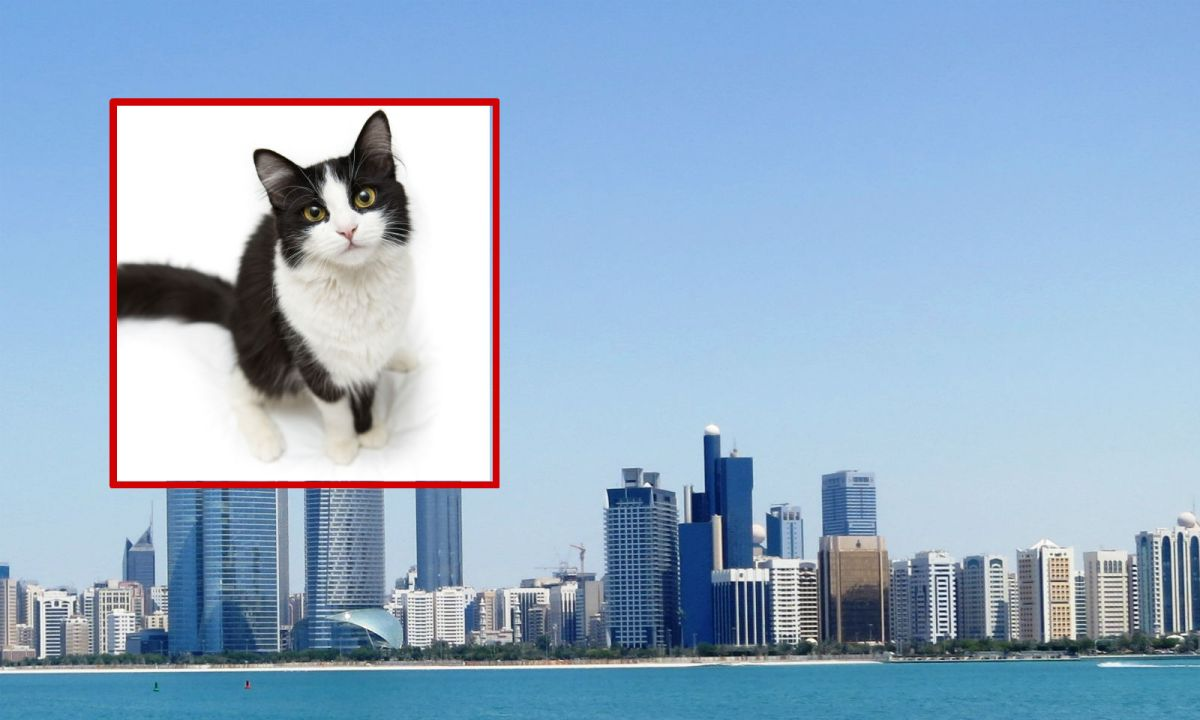 An unemployed Filipino man feeds stray cats in Abu Dhabi every day. Photo: Wikimedia Commons/iStock