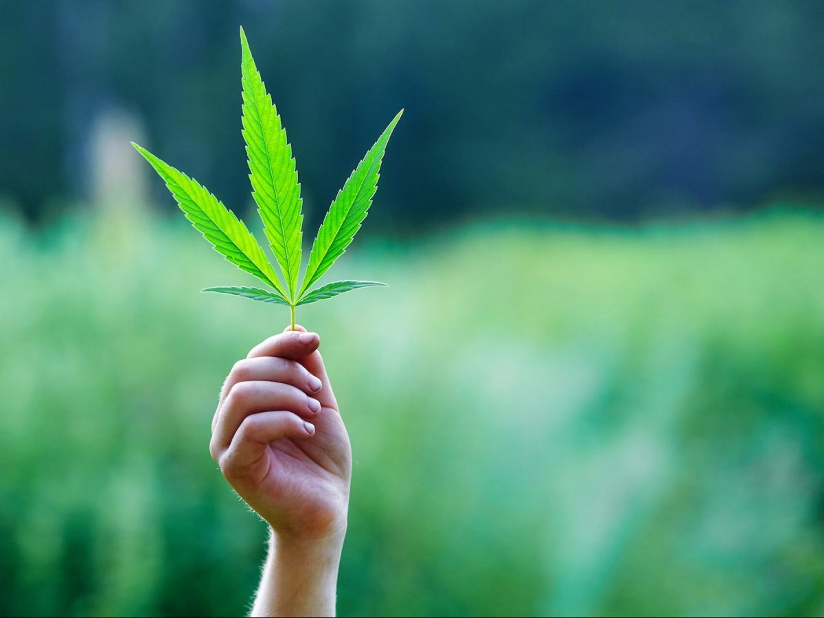 Israeli medical cannabis producers are expected to generate significant government revenue. Image: iStock
