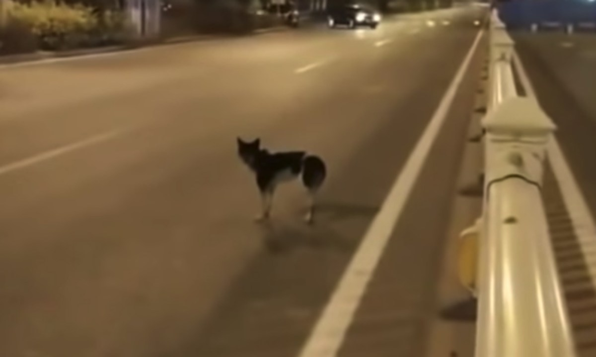 The dog has been waiting for its owner since August. Photo: YouTube.
