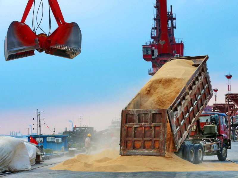Animal feed made from soybeans imported from Brazil is unloaded at a port in Nantong in China's eastern Jiangsu province in August. Photo: AFP