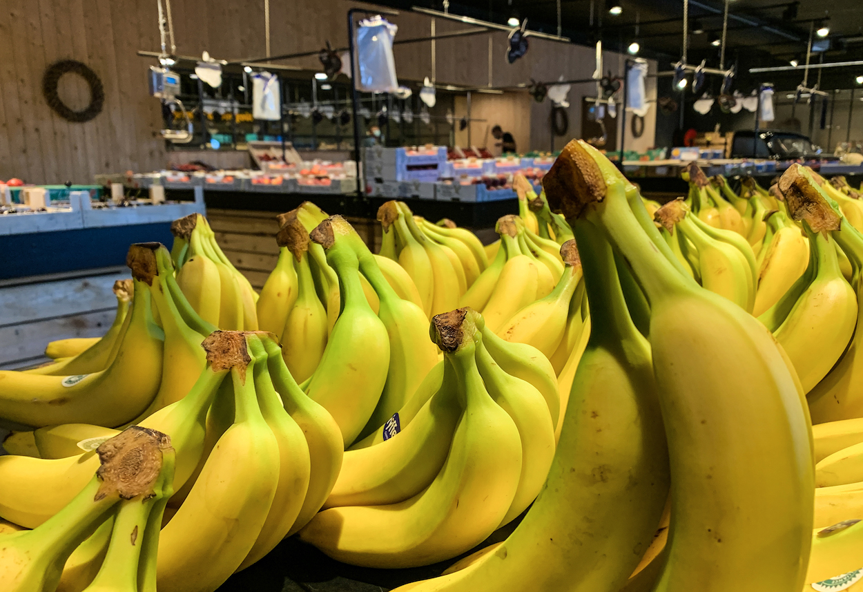 Future And Past Of The Banana Industry Asia Times