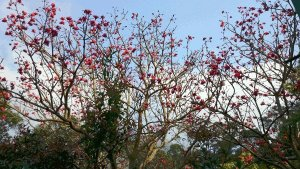 What To See In Hong Kong - Cherry Blossoms along the way to Wisdom Path