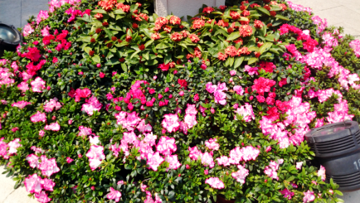 What To See in Hong Kong - Avenue Stars Hong Kong - Flowers at Kowloon Park