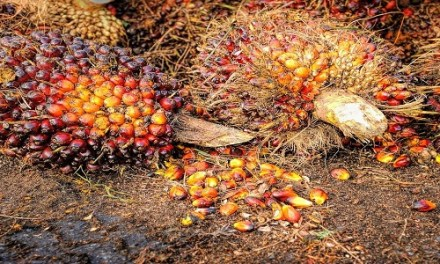 EU Can Engage Palm Oil Producers