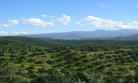 INDONESIA: FINDING COMMON GROUND IN INDONESIA-EU PALM OIL SPAT