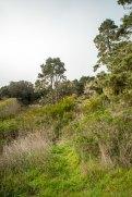 Best Hiking - Mendocino County Highway 1 Coast Views