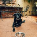 Dog Friendly Restaurants Carmel, California - Forge in Forest
