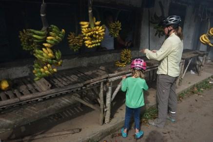 Fingerfood - fingergroße Bananen für 1 Eurocent pro Stück
