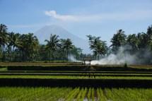 Vulkan Semeru, 3676m, höchster Berg auf Java