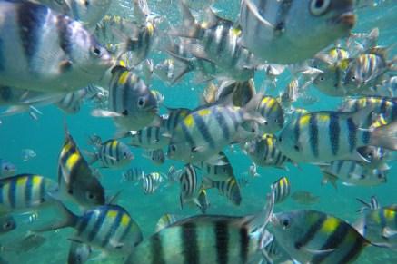 Fishmob