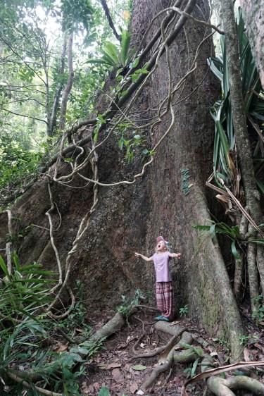 im Khao Lak-Lam Ru Nationalpark