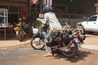 Hühnertransport (lebend)