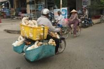 Geflügeltransport