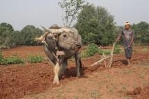mesopotamischer Ackerbau