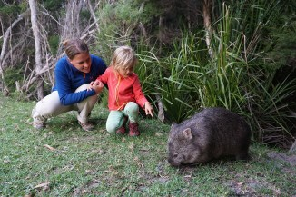 Wombat - Wilsons Promontory NP