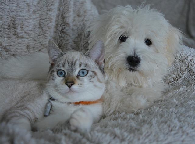 Cambios para las mascotas con el COVID-19