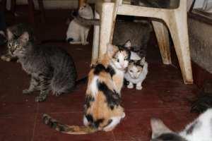adopta un gatito 1