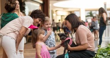 Lugares Pet Friendly en Mérida