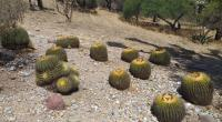 cuidar cactus