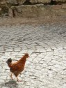 Yes, chickens hanging out in the street.