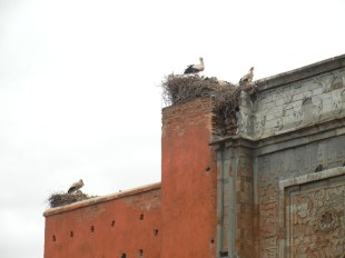 Note the stork nest.