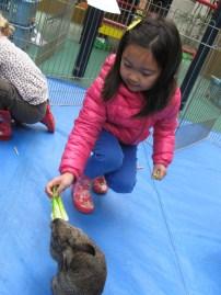 petting zoo 6