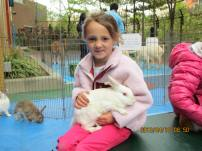 petting zoo 17
