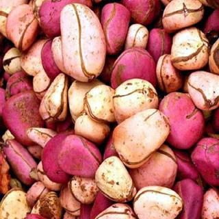 Health Benefits of Cola nut