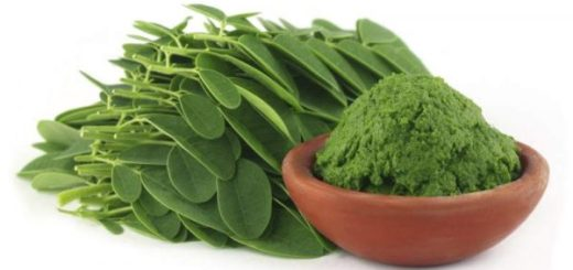 Moringa leaf cure malaria ,boost the immune system, Moringa leaf cure hepatitis B
