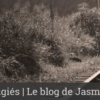 Le blog de Jasmine Caye