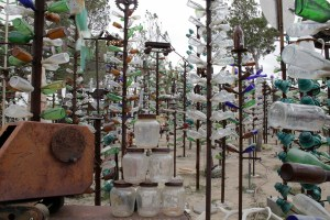 bottle-tree-farm-td